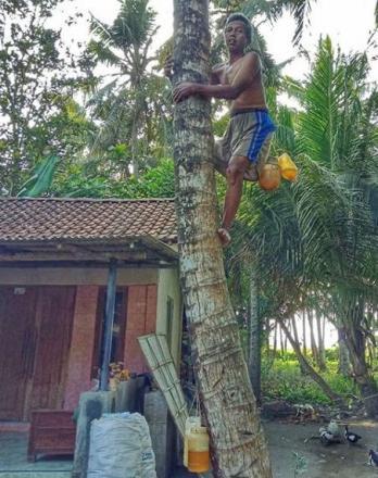 Gula Jawa Asli Dusun Karang