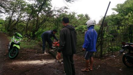 Pemotongan Pohon Tumbang Dusun Kuwaru