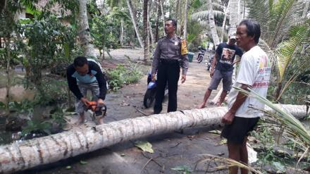 Penanganan Pohon Kelapa Tumbang Dusun Kuwaru