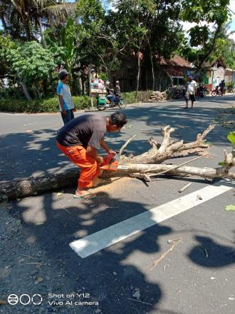 Menghindari Kerusakan Jaringan Listrik, Warga Koripan Melaksanakan Pemangkasan Dahan Pohon